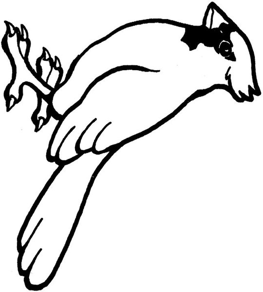 cardinals football coloring pages - photo#26