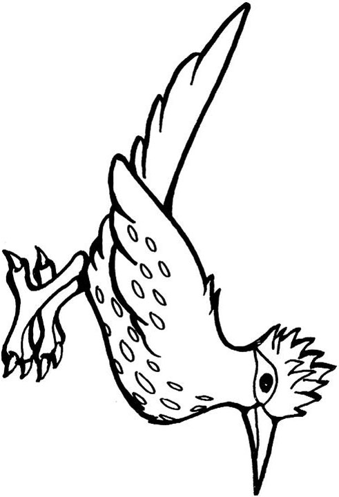 Free coloring pages of roadrunner