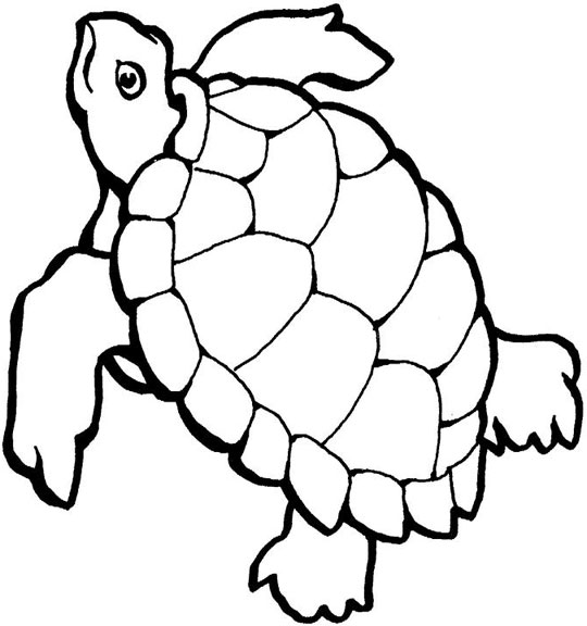wallpaper sea turtle. sea turtle cartoon